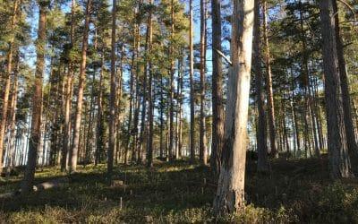 Metsä parantaa mutta miten metsä voi?